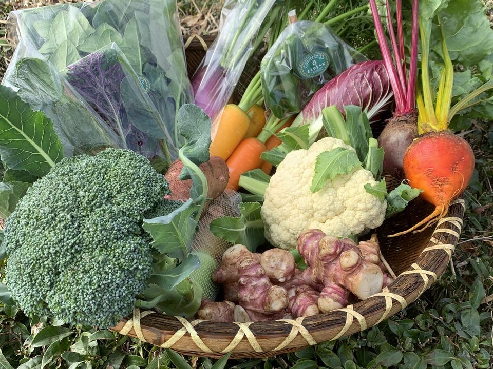 オーガニック野菜セットの写真