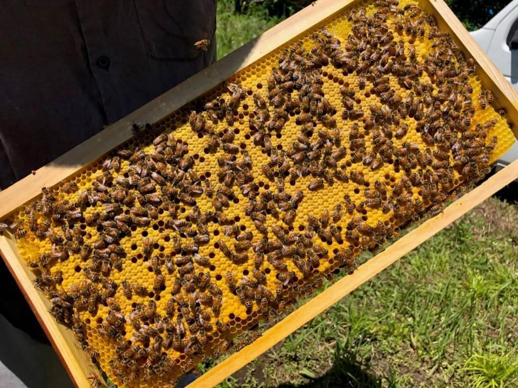 蜂蜜の巣箱の画像