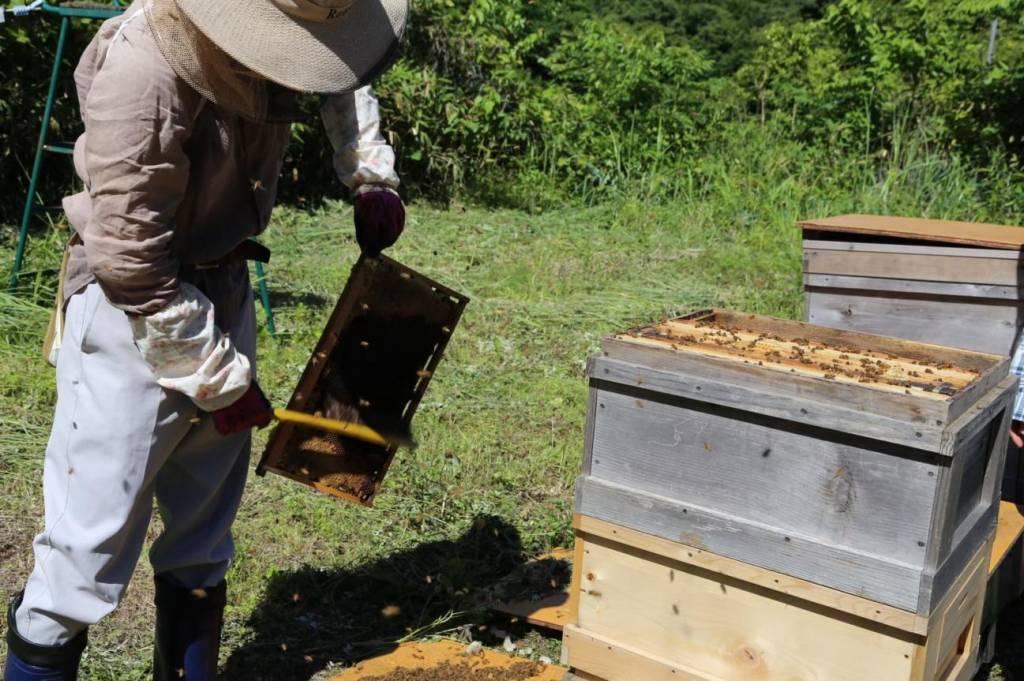 蜜蓋を切り取っている写真