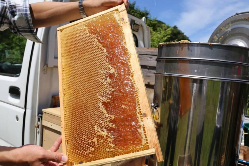 蜂蜜の近影写真